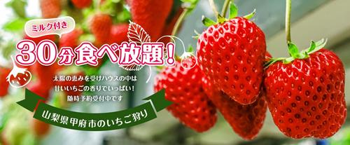 【冬の果物狩り】いちご狩りの季節がやってきます♪